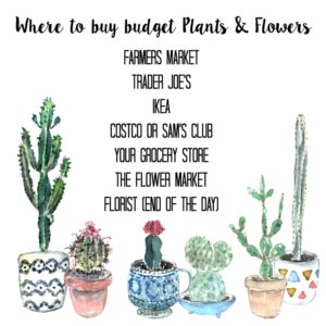 where to buy budget plants and flowers (800x800)